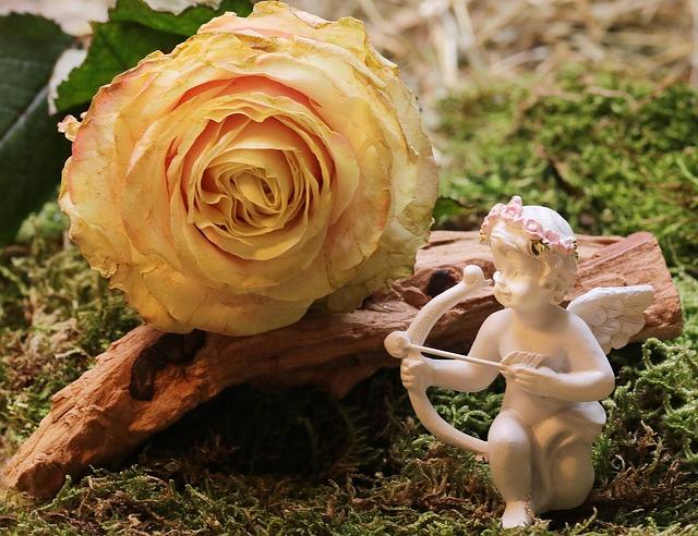 rose-2042268_640